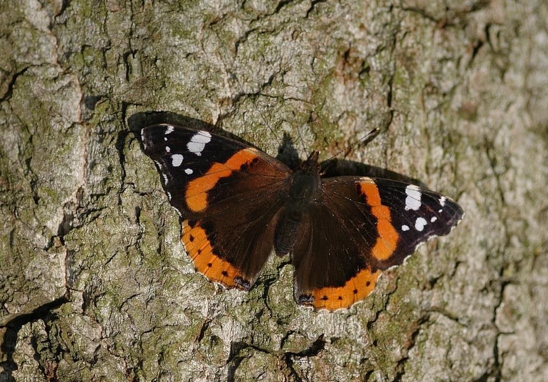 Werkgroep vlinders